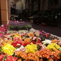 λουλουδια χαλανδρι