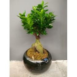 Bonsai - ΦΥΤΑ - Ανθοπωλειο Χαλανδρι