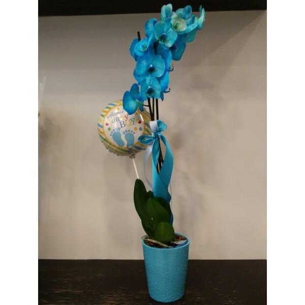 Orchid phalaenopsis - ΦΥΤΑ - Ανθοπωλειο Χαλανδρι