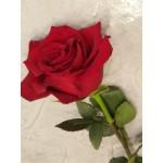 Naomi roses - ΤΡΙΑΝΤΑΦΥΛΛΑ ΜΕ ΤΟ ΚΟΜΜΑΤΙ - Ανθοπωλειο Χαλανδρι